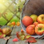 Jahreskreisfest Mabon: Herbst-Tag-und-Nacht-Gleiche